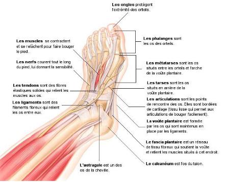 inflammation des os du pied
