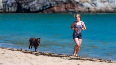 Comment réagir face à un chien lors d'un jogging ?